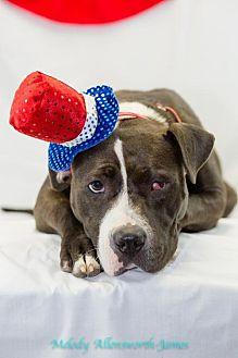 Terrier (Unknown Type, Medium)/Boxer Mix Dog for adoption in Little Rock, Arkansas - Joy