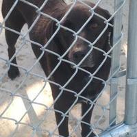 Adopt A Pet :: DR WATSON - Kiln, MS