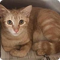 Adopt A Pet :: Tonie - Tampa, FL