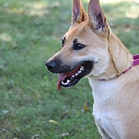 Adopt A Pet :: Sydney - Portland, ME