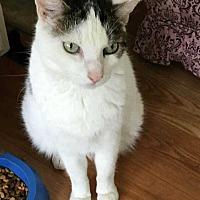 Adopt A Pet :: Bo (brown) (Rambo) - Harleysville, PA