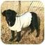 Photo 2 - Labrador Retriever Mix Dog for adoption in Muldrow, Oklahoma - Little Bear