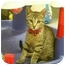 Photo 3 - Domestic Shorthair Kitten for adoption in Palmdale, California - Button