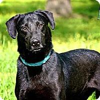Adopt A Pet :: Asa - Albany, NY