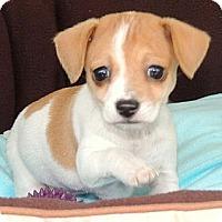 Adopt A Pet :: Nori - La Habra Heights, CA