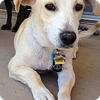 Adopt A Pet :: Roo IM SILLY AND CUDDLY - Scottsdale, AZ