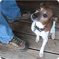 Adopt A Pet :: Bogie Boy - Concord, CA