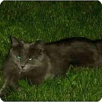 Adopt A Pet :: Sunny - Washington Terrace, UT