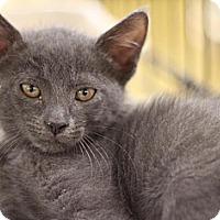 Adopt A Pet :: Grayson - Sacramento, CA