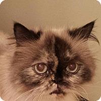 Adopt A Pet :: Keeley - Columbus, OH