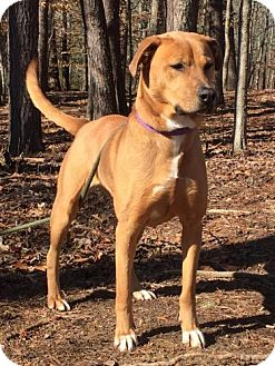 Shepherd (Unknown Type) Mix Dog for adoption in Washington, D.C. - Donder