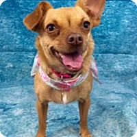 Adopt A Pet :: Trinity - Lake Elsinore, CA