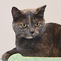 Adopt A Pet :: Ruby - Farmington Hills, MI
