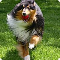 Adopt A Pet :: Baron - Powell, OH