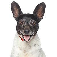 Adopt A Pet :: Dallas - Los Angeles, CA