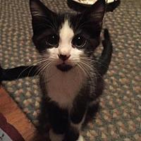 Adopt A Pet :: Leonardo - Columbia, SC