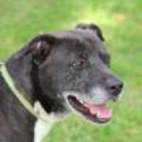 Adopt A Pet :: Han - Helotes, TX
