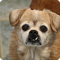 Adopt A Pet :: Joey - Greensboro, NC