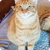 Adopt A Pet :: Sarge - MARENGO, IL