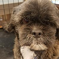 Adopt A Pet :: Snooky - Ogden, UT