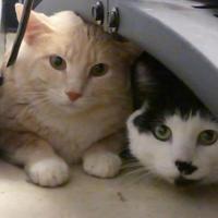 Adopt A Pet :: Swizzz - Evans, CO
