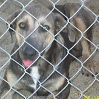 Adopt A Pet :: Lilac - Mexia, TX