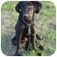 Photo 3 - Labrador Retriever Dog for adoption in Montevallo, Alabama - Maxwell