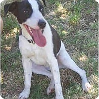 Adopt A Pet :: AMP - Phoenix, AZ