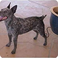 Adopt A Pet :: Bessie - Phoenix, AZ