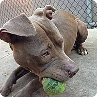 Adopt A Pet :: June Cash - Chicago, IL