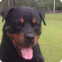 Adopt A Pet :: Jasper - Alachua, GA