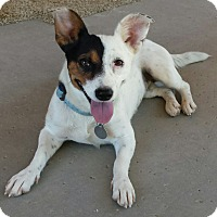 Adopt A Pet :: Wishbone - Scottsdale, AZ