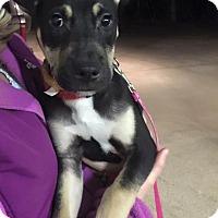 Adopt A Pet :: Washington - Burlington, NJ