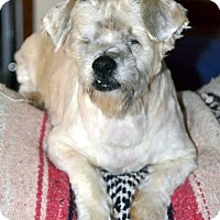 Terrier (Unknown Type, Small) Mix Dog for adoption in Melrose, Florida - Jackson
