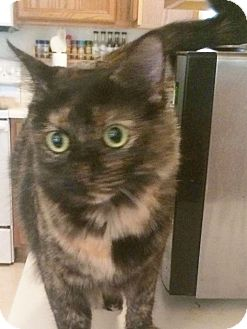 Domestic Shorthair Cat for adoption in Arlington/Ft Worth, Texas - Ruby