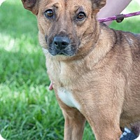 Adopt A Pet :: Bindi - Gainesville, FL