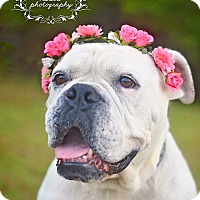 Adopt A Pet :: Magnolia - Fort Valley, GA