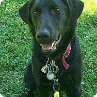 Adopt A Pet :: Dee Dee - Hillsboro, IL