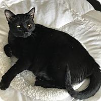 Adopt A Pet :: Rosebud TG - Schertz, TX