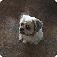 Adopt A Pet :: *ADOPTION PENDING* Gizmo - Parsippany, NJ