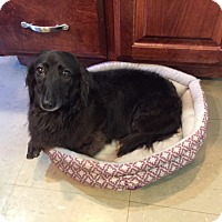 Adopt A Pet :: Colby - Russellville, KY