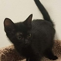 Adopt A Pet :: Hoggle - Colonial Heights, VA
