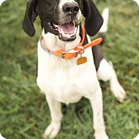 Adopt A Pet :: Chester D Chesterfield - Sweetwater, TN