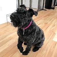 Adopt A Pet :: Meg - Sagaponack, NY