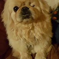 Adopt A Pet :: Dallas - DAYTON, OH