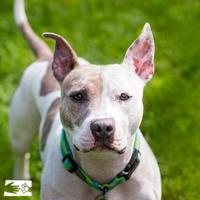 Mixed Breed (Medium) Mix Dog for adoption in South Burlington, Vermont - Ruby