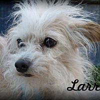 Adopt A Pet :: Larry - Anaheim Hills, CA