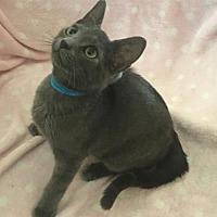 Adopt A Pet :: Carson - Harrisville, WV