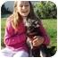 Photo 4 - Yorkie, Yorkshire Terrier Mix Dog for adoption in El Cajon, California - sparkles