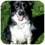 Photo 1 - Border Collie Dog for adoption in San Pedro, California - SOPHIE
